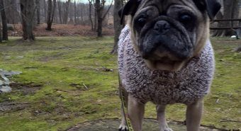 Pug Rescue of New England